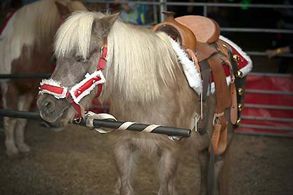 One of the ponies available to ride at Sights & Sounds